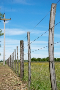 Six Wire Fence